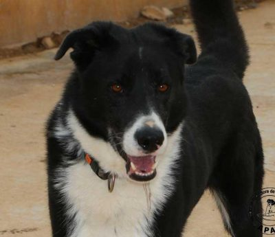 Dardo searching a forever home