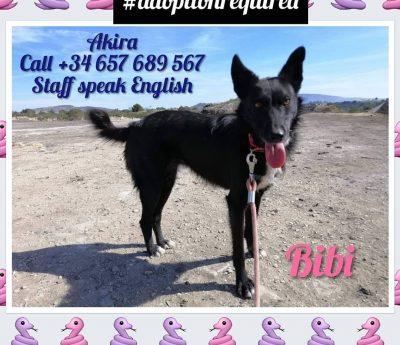 Bibi, Akira