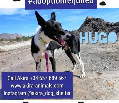 Hugo, Akira