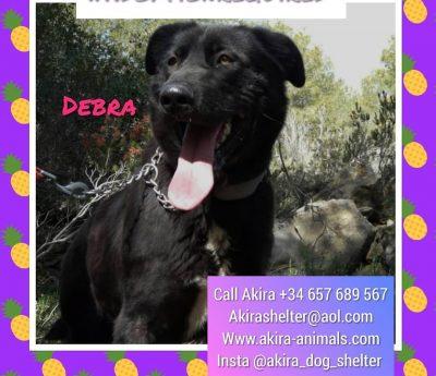 Debra, Akira