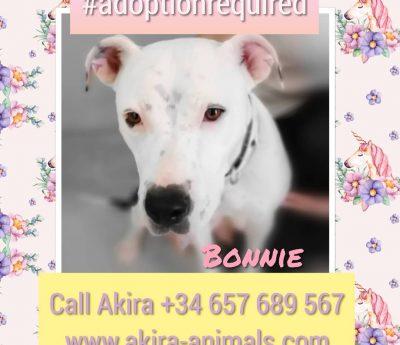 Bonnie, Akira