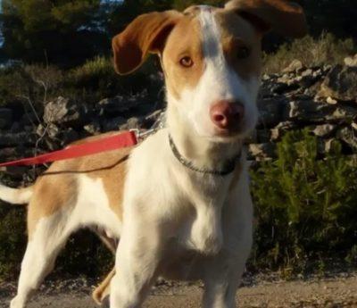 Bruno, puppy