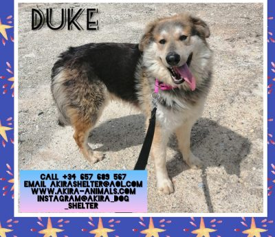 Duke HOME TRIAL