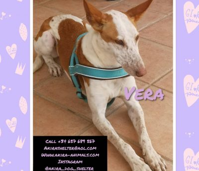 Vera available for adoption