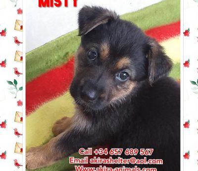 Misty, puppy