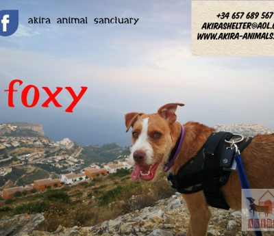 Foxy reserved