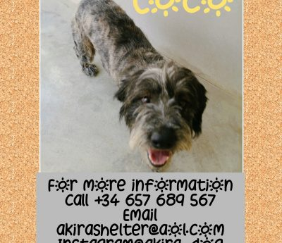 Coco ADOPTED