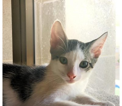 Coco – kitten
