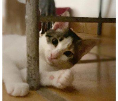 Estrella – young cat