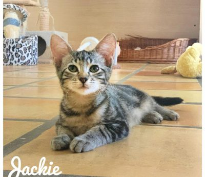 Jackie – young cat