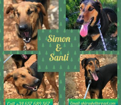 Simon and Santi (A pair)