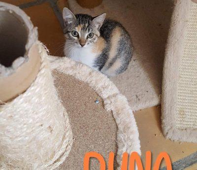 Duna- kitten