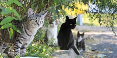 Feral and stray cats in Spain