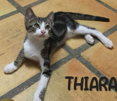 Thiara – kitten