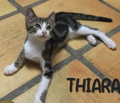 Thiara – young cat