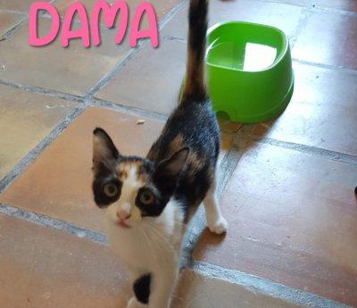 Dama- kitten