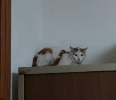 Lilo- kitten