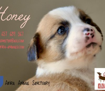 Honey RESERVED