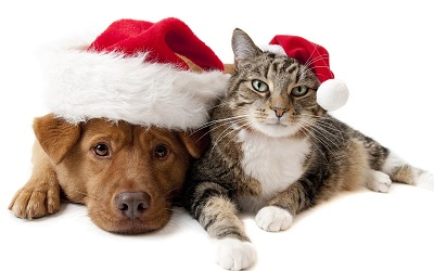 Page Icon Radio commercial for Adoptapet December 2019