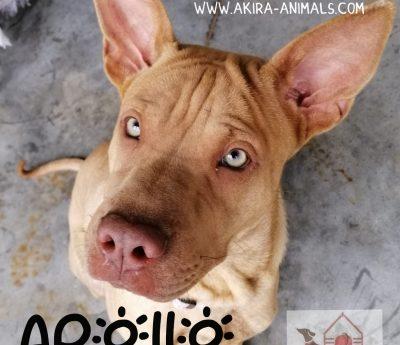 Apollo on home trial