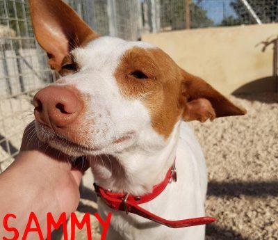 Sammy reserved