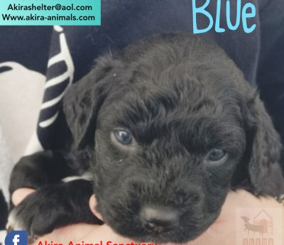 Blue reserved