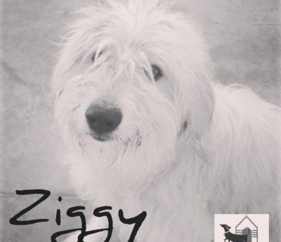Ziggy reserved
