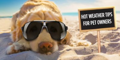 Looking after your pet in hot weather.