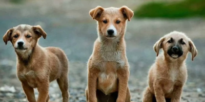 20 Questions to ask when adopting a dog