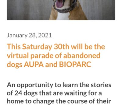 Virtual dog parade, January, Saturday 30th