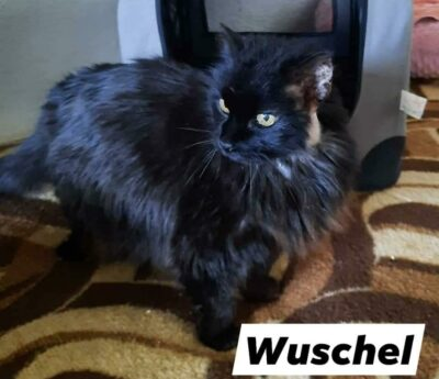 Mimi & Wuschel