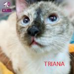 triana-2.png