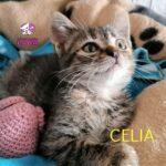 celia-1.jpg