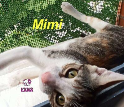 Mimi, cachorrita