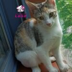 gabby-cachorrita-@asociacionlara-2-1.jpeg