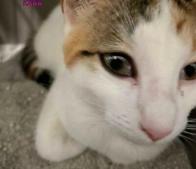 Ailana, kitten